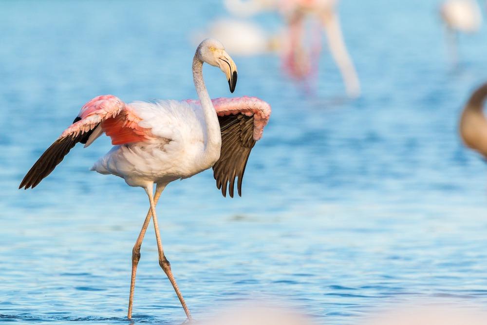 Lo stagno di Notteri, il paradiso dei fenicotteri rosa